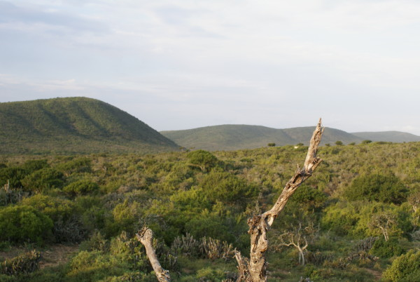 Jakt-Sør-Afrika-terreng.jpg