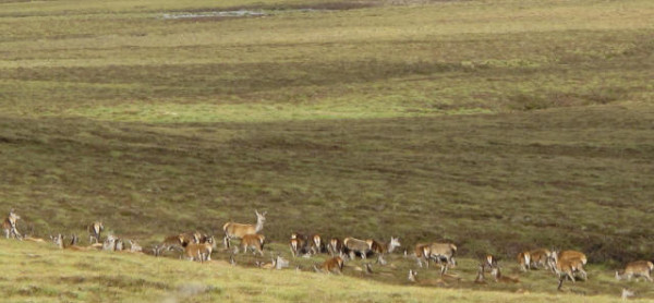 Jakt Skottland hunndyr i terrenget
