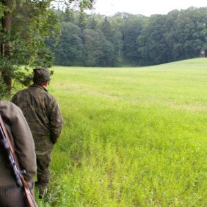 Jakt Polen bukkejakt smyg