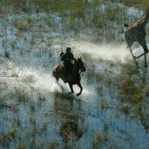 Rideferie-Botswana-Okavango-rir med giraff i vann