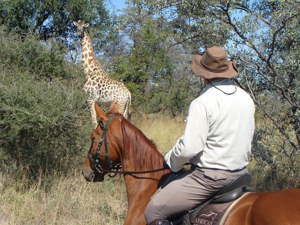 Rideferie-Sørafrika-ridesafari-på hest med giraff i bakgrunn