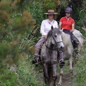 Rideferie_Portugal_Porto_Ulver og ville hester (18)