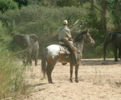 Rideferie_ridesafari_SørAfrika_WaitaLittle_ridning (29)
