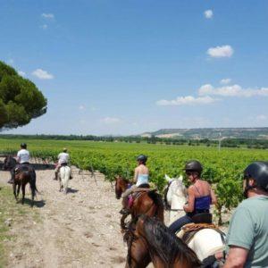 Rideferie_Spania_ElCid_ridning_wineroute (3)