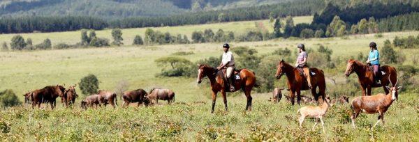 Rideferie_Afrika_Zwaziland_ridning_panorama