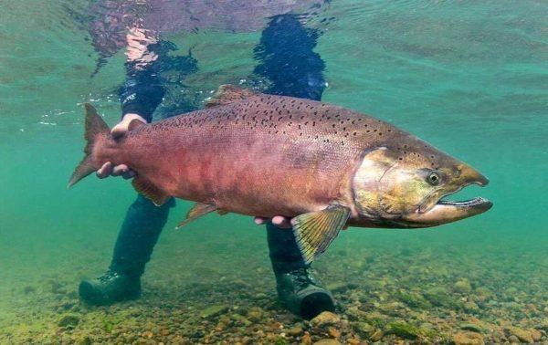 Fiske Alaska ATA XXLAdventure (4)