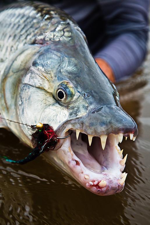 Fiske Tanzania Tigerfiske